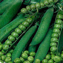 Тристар семена гороха овощного среднего (Satimex СДБ)