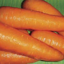 Амстердамская семена моркови тип Нантес среднеранней 100-110 дн. (Servise plus (GSN) СДБ)