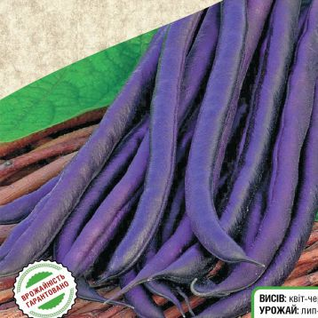 спаржевая фасоль пурпурная королева