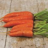 Нью Курода семена моркови Курода ранней (Semenaoptom)