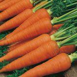 Осенняя Королева семена моркови Флакке поздней (Semenaoptom)