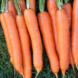 Тушон семена моркови Нантес ранней (Semenaoptom)