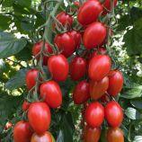 томат черрі пекбол f1
