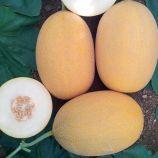 Локум F1 семена дыни тип Ананас ранней 70-75 дн. 1,5-3 кг овал. оран./бел. (Yuksel)