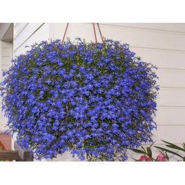 Регатта темно-синяя семена лобелии каскадной (Pan American)