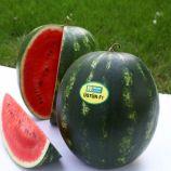 Устун F1 семена арбуза тип кр.св. среднего 68-75 дн. 8-10 кг окр. (Yuksel)