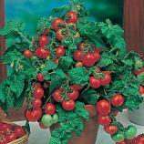 Минибел семена томата комнатного (Hem Zaden)