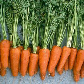 морковь шантане ред коред