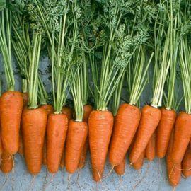 Шантане Ред Коред семена моркови среднепоздней 125-140 дн. (Servise plus (GSN) СДБ)