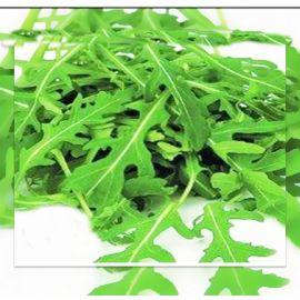 Рокет семена салата (Руккола) (Servise plus (GSN) СДБ)