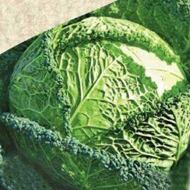 Форботе семена капусты савойской ранней 0,6-1 кг (Satimex СДБ)