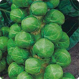 Розелла семена капусты брюссельской среднеранней (Satimex СДБ)
