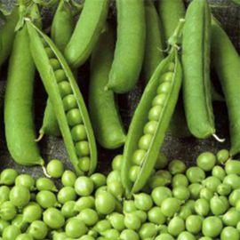 Амброзия семена гороха сахарного раннего 56 дн (Satimex СДБ)