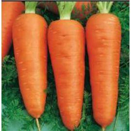 Кампино семена моркови Шантане среднеранней 100-110 дн. (Satimex СДБ)