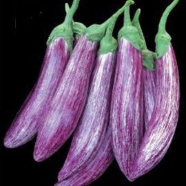 Зебрино F1 семена баклажана среднего 95-120 дн. 200-300 гр. удл.-цил. полос. (Yuksel)