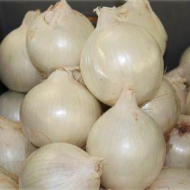 Вайт Винг F1 семена лука репчатого раннего 90-95дн. белого (Bejo)