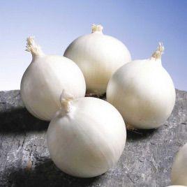 Гледстоун семена лука репчатого раннего 100-105дн. белого (Bejo)