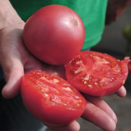 Малинка Стар F1 семена томата индет. раннего окр.-прип. розового 200-250г (Cora Seeds)