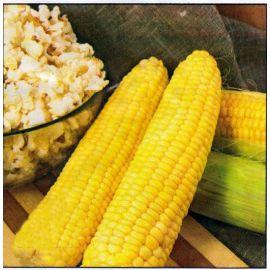 Оскар насіння кукурудзи попкорн (Anseme)