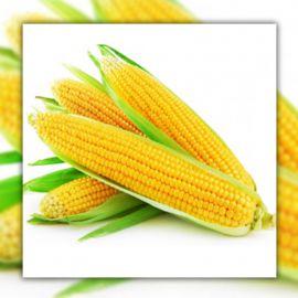 Турбин F1 семена кукурузы суперсладкой Sh2 ранней 70-72дн. 20-22см 16-18р. (Clause)
