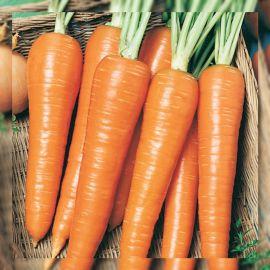 Роте Ризен семена моркови поздней 21-24 см (Servise plus (GSN) СДБ)