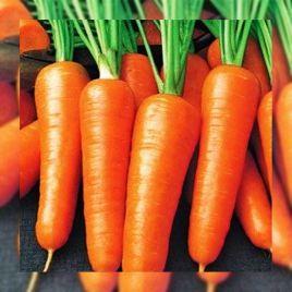 Роял Шансон семена моркови тип Шантане среднепоздней 125-140 дн. 13-15 см (Servise plus (GSN) СДБ)