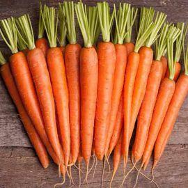 Без сердцевины семена моркови (Професійне насіння)