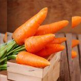 Каротель семена моркови (Професійне насіння)