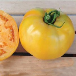 Елоу Чир F1 семена томата полудет. 70 дн. окр.желт. 150-200 гр. (Dorsing Seeds)