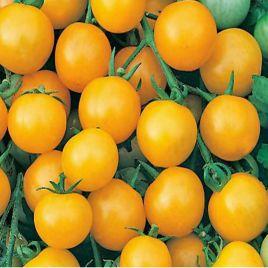 Хани Дропс F1 семена томата дет. черри раннего 60 дн. желт. (Dorsing Seeds)