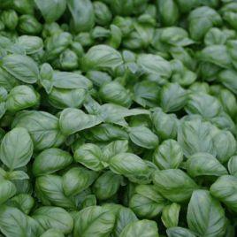 Изумруд семена базилика зел. (Satimex СДБ)