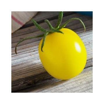 Золотой шар семена томата индет. среднераннего 106-110дн 150г окр. желт. (Професійне насіння)