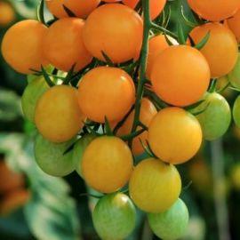 Черри желтый семена томата индет. среднераннего 95-100дн 15-20г окр. желт. (Професійне насіння)