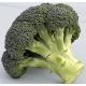 Батори F1 семена капусты брокколи 75-80 дн. 1,5-2 кг (Syngenta)