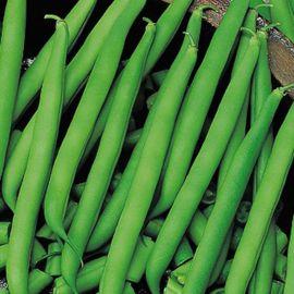 Сидерал семена фасоли овощной (Satimex СДБ)