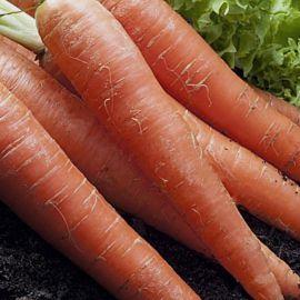 Детская семена моркови (Професійне насіння)