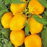 Чудо света семена томата индет. среднего 110-115дн. 70-100г слив. с нос. желт. (Професійне насіння)