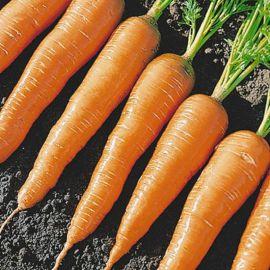 Карнавал семена моркови Флакке среднеспелой 120 дн. 75-200гр. 14-16см (Semenaoptom)