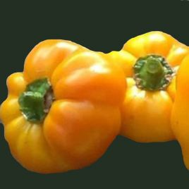 Золотое руно семена перца сладкого тип Гогошар средн. 150-160дн. 180-220г. 8,5-10мм зел/оранж. (Semenaoptom)