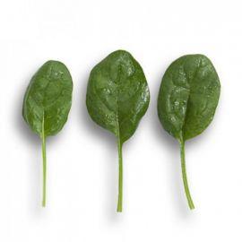 Вудпекер семена шпината (Rijk Zwaan)