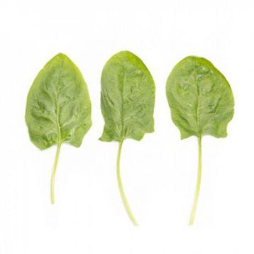 Гну семена шпината (Rijk Zwaan)
