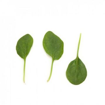 Сильвервейл семена шпината (Rijk Zwaan)