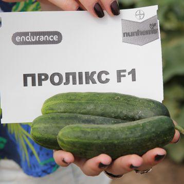 Проликс F1 семена огурца корнишона партенокарп. раннего 40-42 дн. 10-12 см (Nunhems/Endurance)