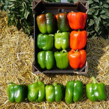 Марек F1 (Карисма F1) семена перца сладкого тип Блочный раннего 70-75 дн. корот.куб. 250 гр. 11х9 см 7-8 мм зел./красн. (Clause)