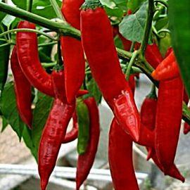 Анахайм красный семена перца среднего 15-20 см красн. (Satimex СДБ)