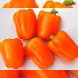Гурме семена перца сладкого среднего 150-300 г (Украина СДБ)