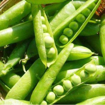 Приамо семена гороха овощного раннего 80 дн. (SAIS)