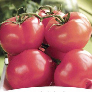 ПинкТоп F1 семена томата индет. розового (NongWoo Bio)