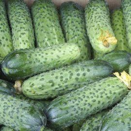 Аваланж F1 (Авелла F1) семена огурца партенокарп. раннего 37 8-11 см (NongWoo Bio)
