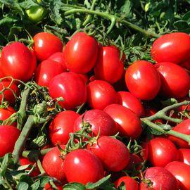 Реди F1 семена томата дет. раннего 70 дн. слив. 80 гр. (Esasem)